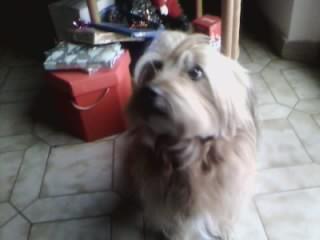 willy in attesa del regalo