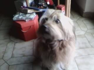 willy in attesa del regalo